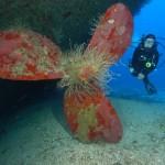 corveta---mergulho2123